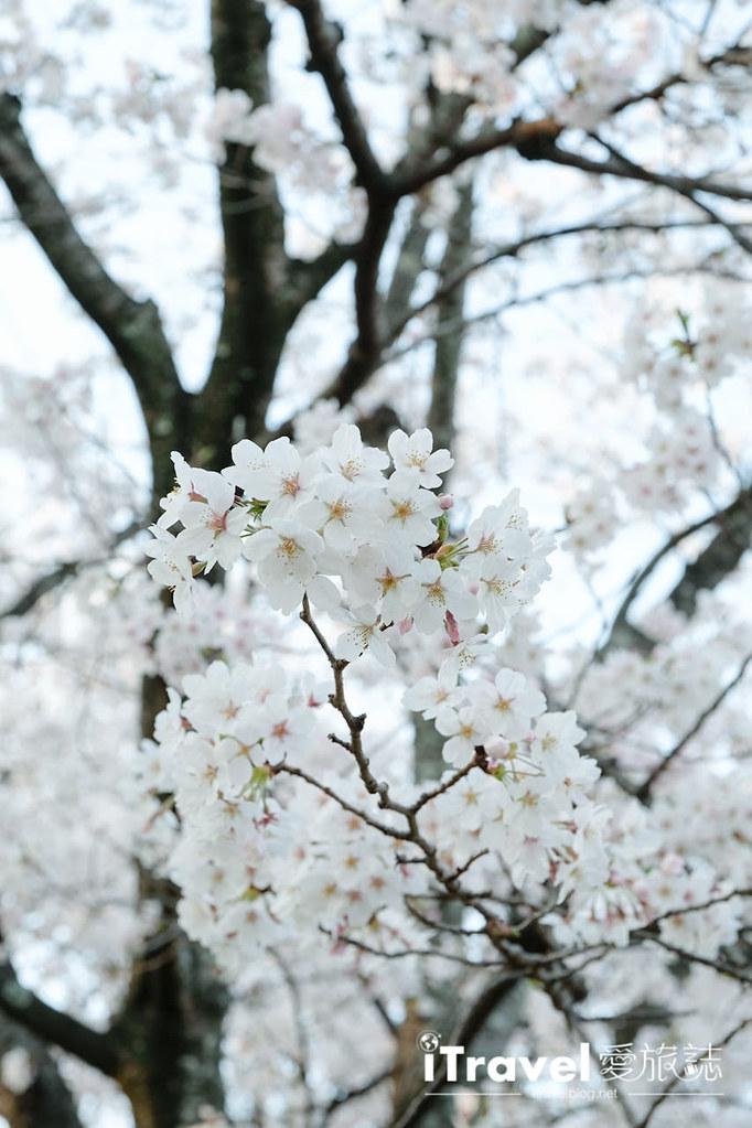 福岡賞櫻景點 西公園Nishi Park (30)