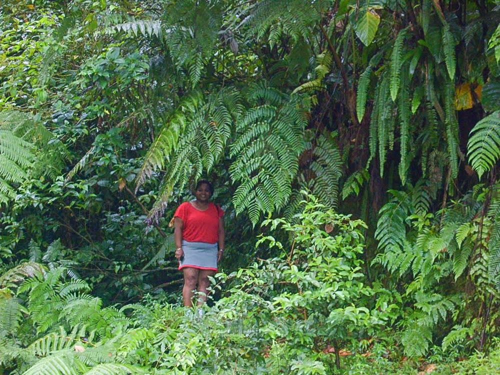 Dominica LR 2