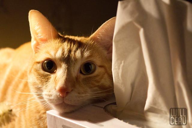 Tissue Box Pillow