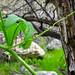 Nature's turnbuckle