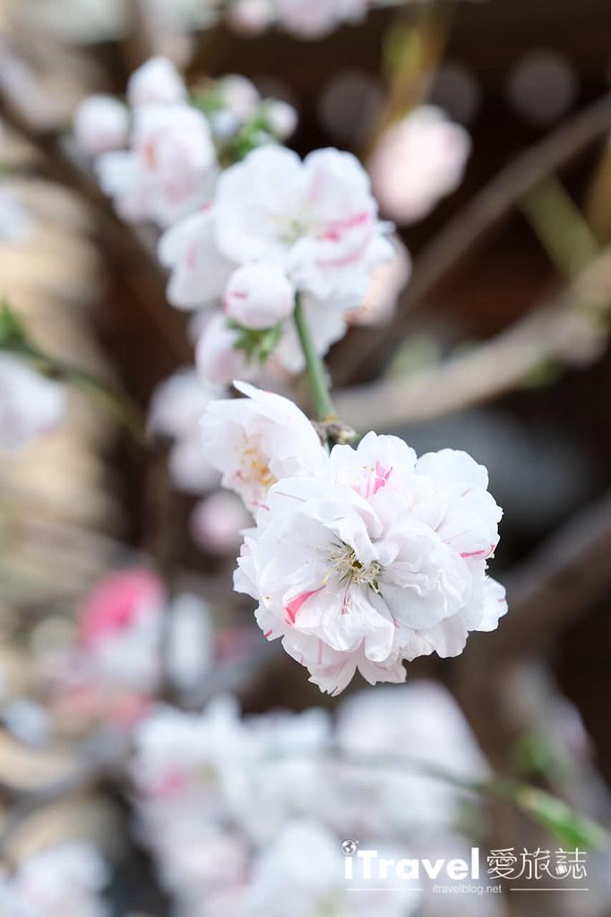 福岡賞櫻景點 櫛田神社 (22)