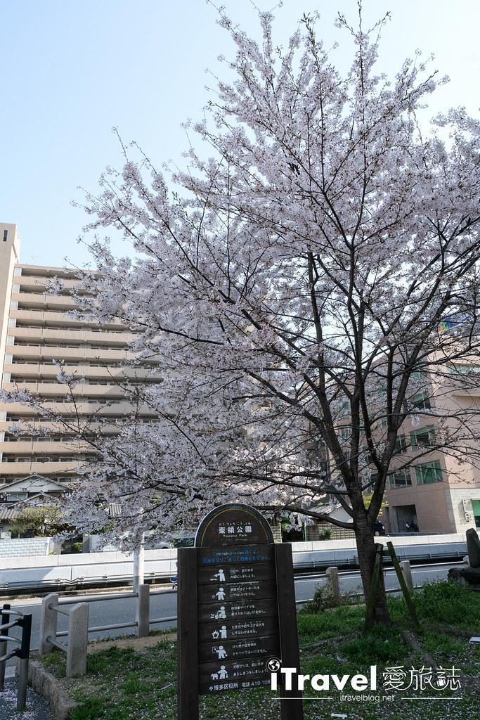 福岡賞櫻景點 美野島公園、東領公園 (25)