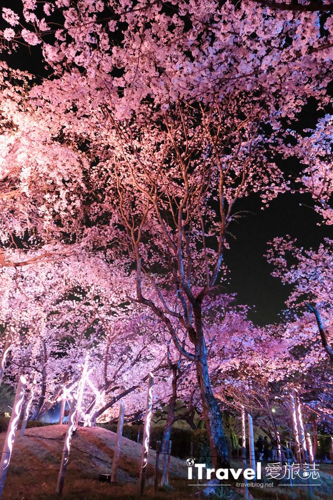 賞櫻景點 福岡城夜櫻 (70)
