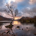 Llyn Padarn - Lone tree