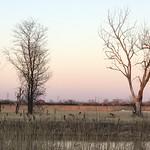 Deer at Big Marsh Park
