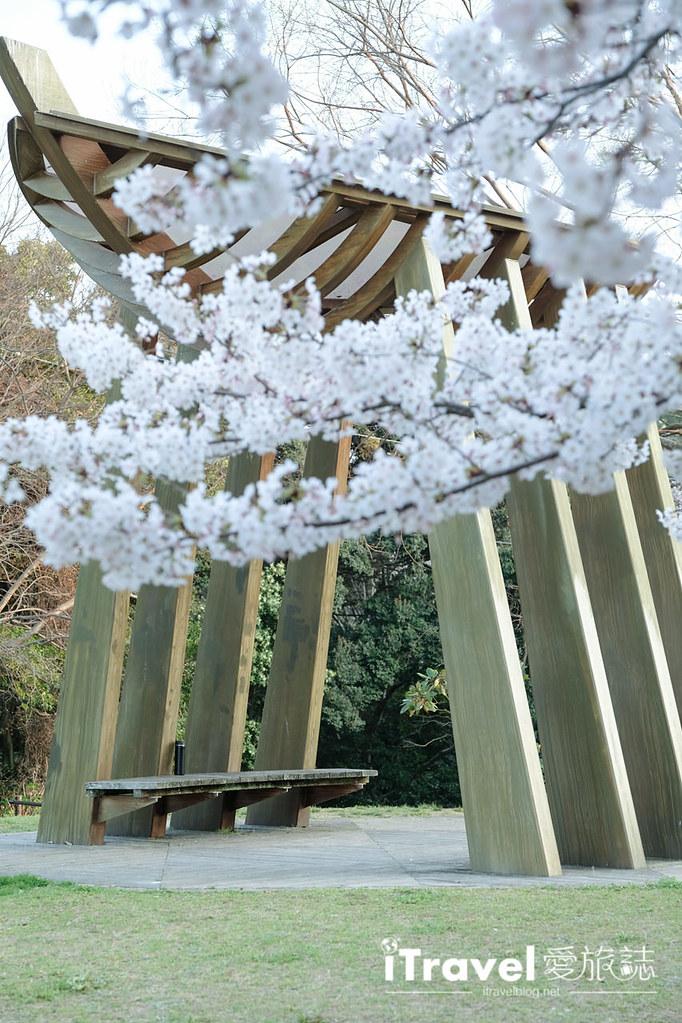 福岡賞櫻景點 西公園Nishi Park (59)
