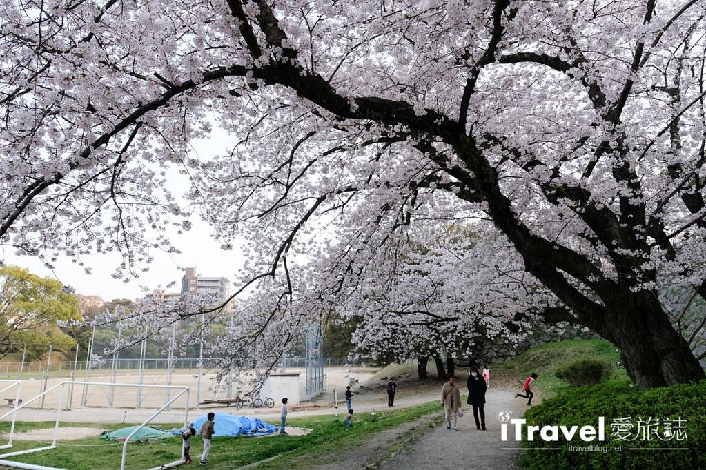 福岡賞櫻景點 福岡城 (47)