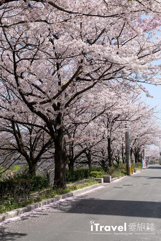 福岡賞櫻景點 美野島南公園 (23)