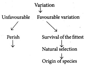 Plus Two Zoology Chapter Wise Questions and Answers