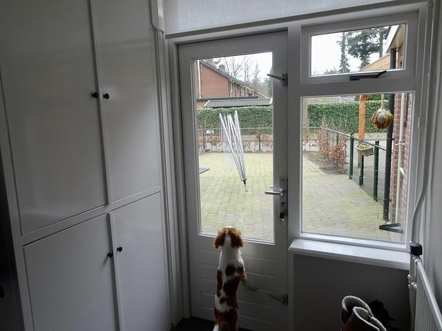 Hondje kijkt naar buiten