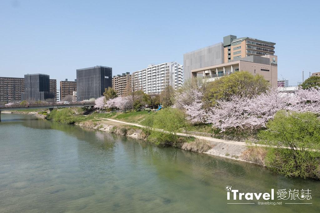 福岡賞櫻景點 美野島南公園 (17)