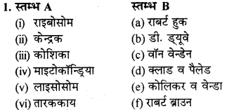 RBSE Solutions for Class 9 Science Chapter 6 Structure of living 30