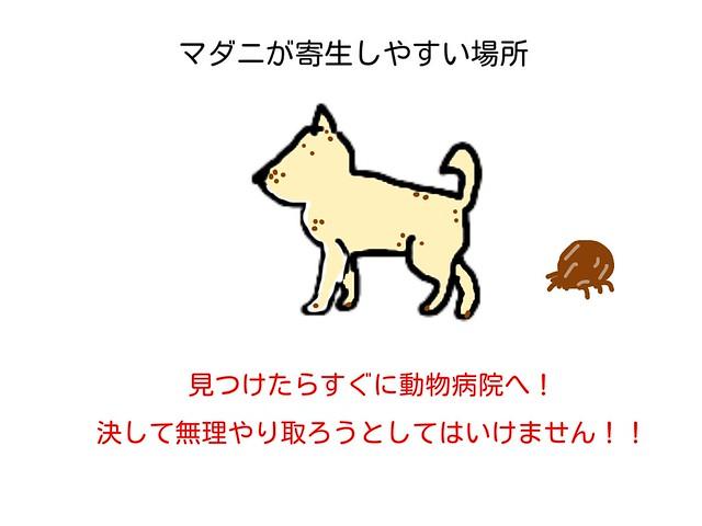 犬の体でマダニが寄生しやすい場所