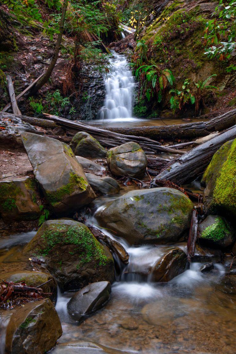 01.13. Portola Redwoods State Park