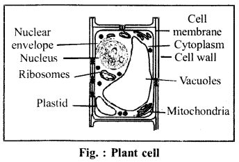 RBSE Solutions for Class 6 Science Chapter 7 Cell