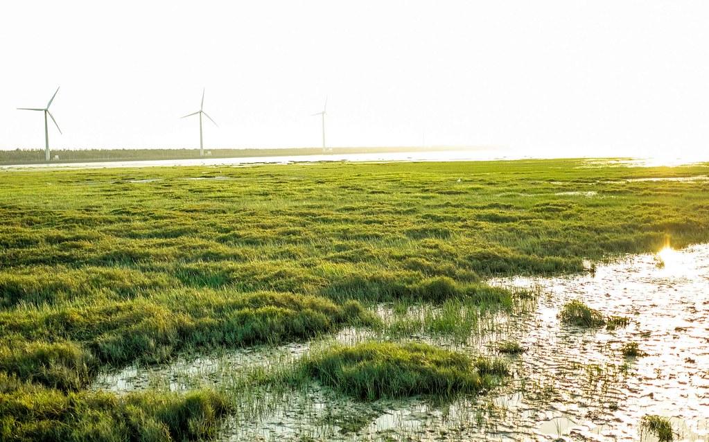 Gaomei Wetlands