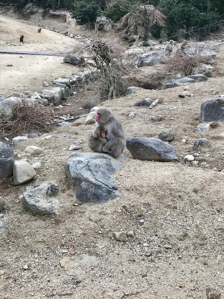 Natuurpark Osaru no Kuni