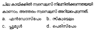 Plus Two Botany Model Question Papers Paper 3Q4