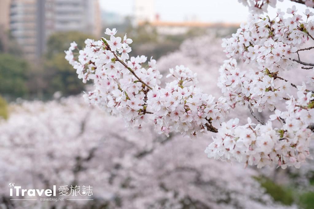 賞櫻景點 福岡城夜櫻 (6)