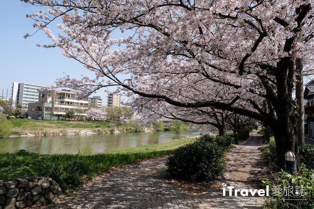 福岡賞櫻景點 美野島南公園 (26)