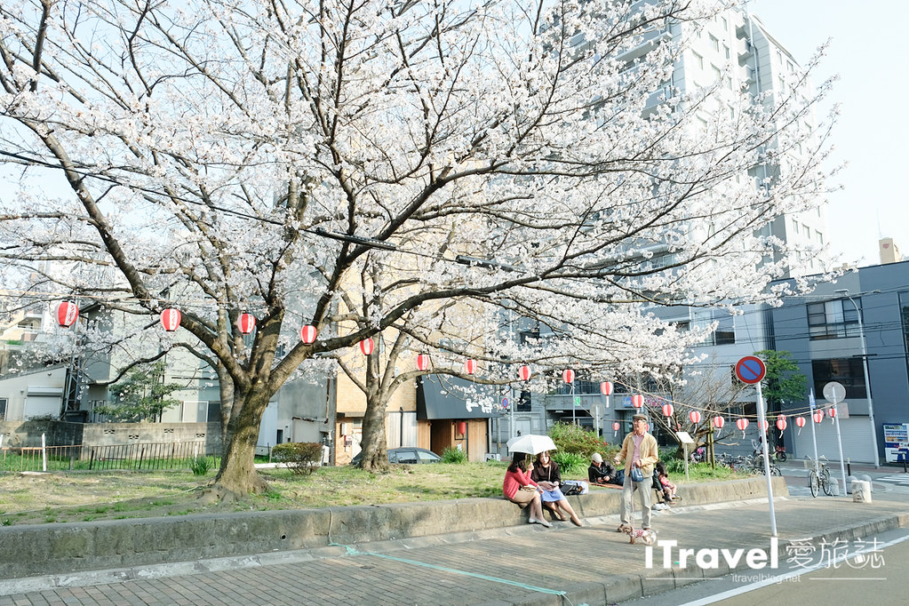 福岡賞櫻景點 西公園Nishi Park (7)