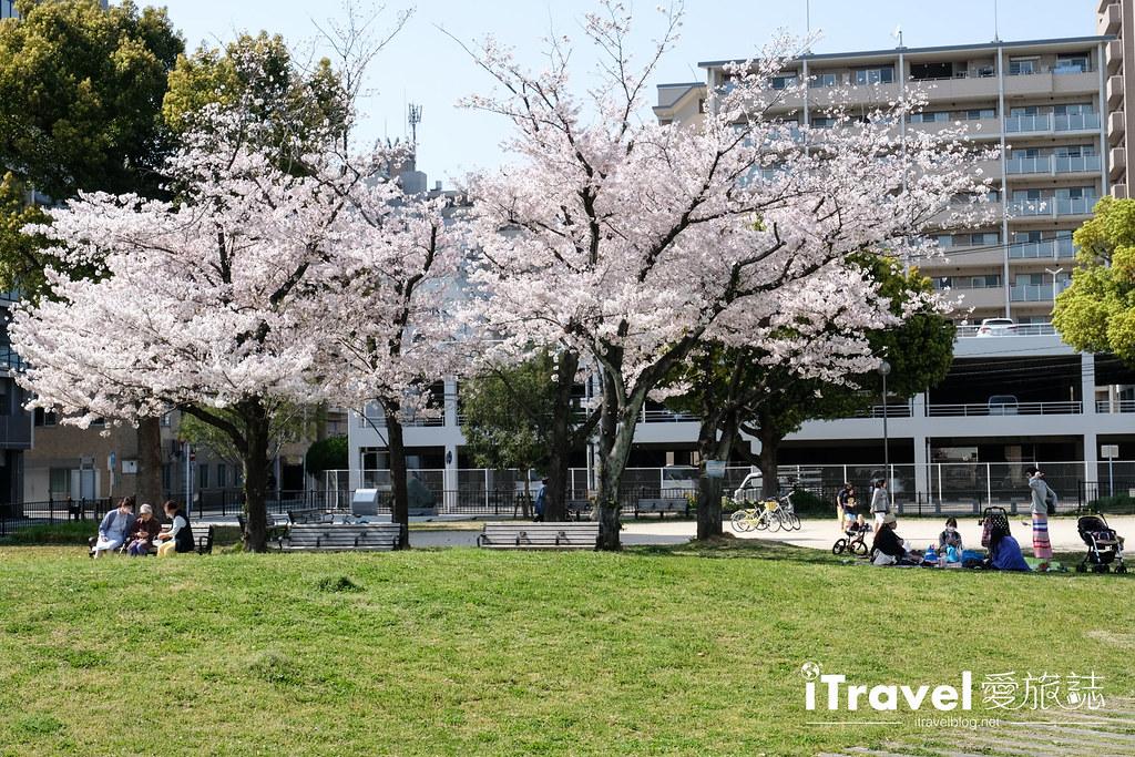 福岡賞櫻景點 美野島公園、東領公園 (12)