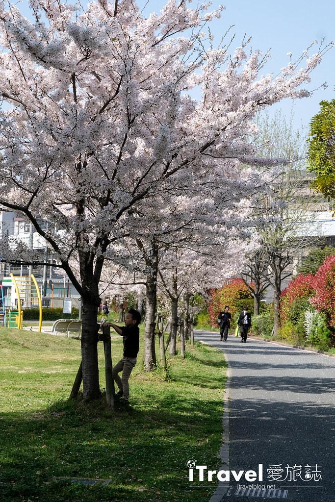 福岡賞櫻景點 美野島公園、東領公園 (10)