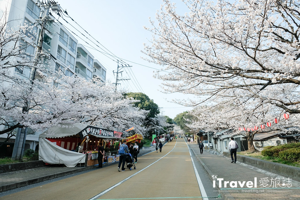 福岡賞櫻景點 西公園Nishi Park (6)