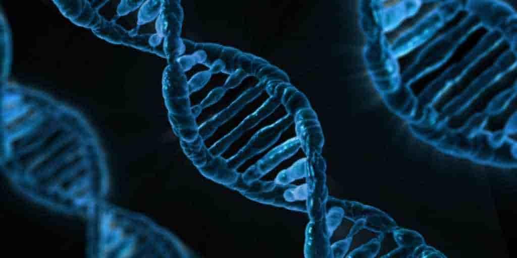 gènes-modification-humain-outil-édition-CRISPR