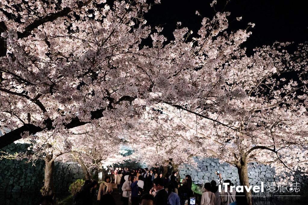 賞櫻景點 福岡城夜櫻 (81)