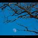 Luna o l'altra