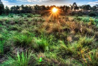 Florida Prairie Sunrise
