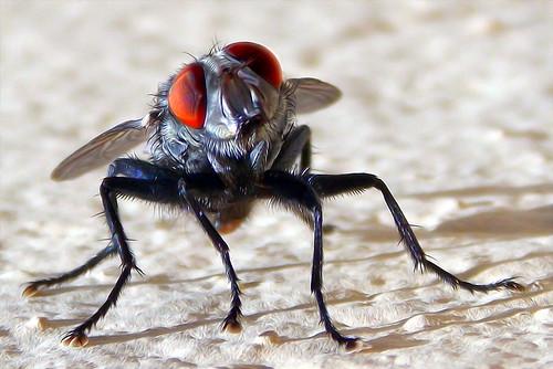 The Fly (Fabianni L. Ribeiro) mygearandme
