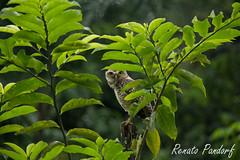 Behind green leaves