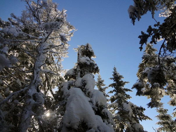 Snow Covered Treetops on Baldpate Mountain