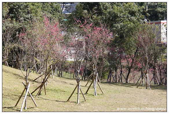 [旅遊.桃園]角板山公園賞櫻~春節一日遊行程規劃 @VIVIYU小世界