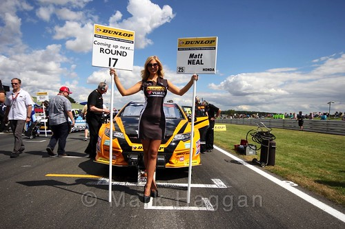Matt Neal's car during the Grid Walks at the BTCC 2016 Weekend at Snetterton