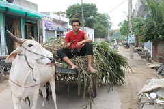 Field visit in Punjab, India