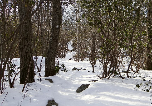 Conklins Crossing Trail