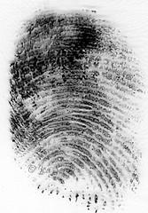 fingerprint024