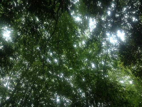 6月15日_23_雨の森に光降る