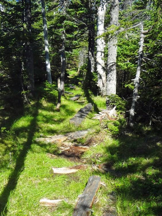 Alpine Marsh