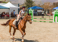 "Crossroads Equestrian Centre • <a style=""font-size:0.8em;"" href=""http://www.flickr.com/photos/67597598@N08/29135475293/"" target=""_blank"">View on Flickr</a>"