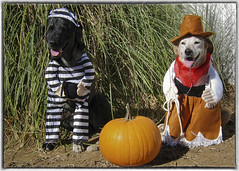 two dogs in halloween costumes funny