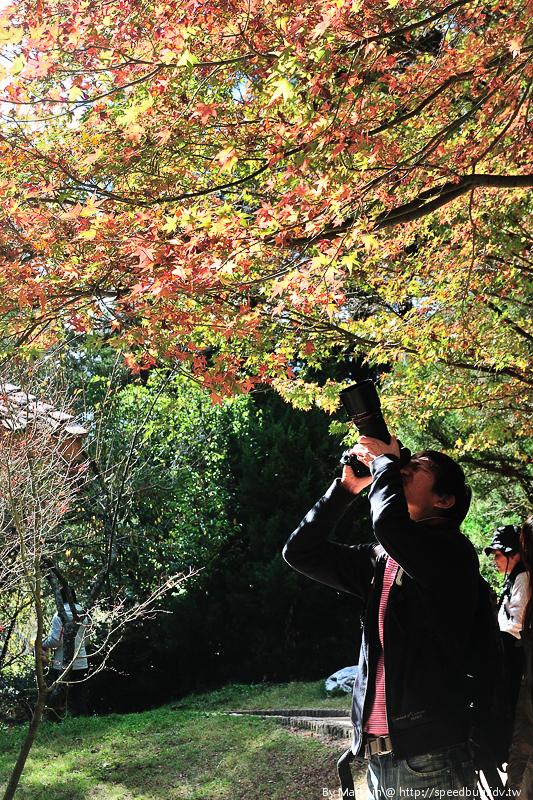 福壽山農場楓紅-45