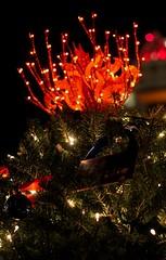 The WaterFire Christmas Tree.