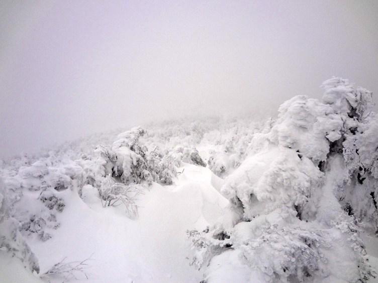 Mt. Pierce Krummholz on Crawford Path