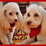 Lola & Charly