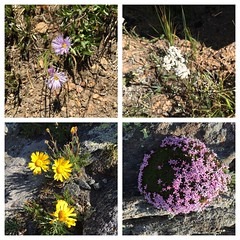 Wildflowers along the way!