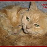 Sirbrina  and Salem